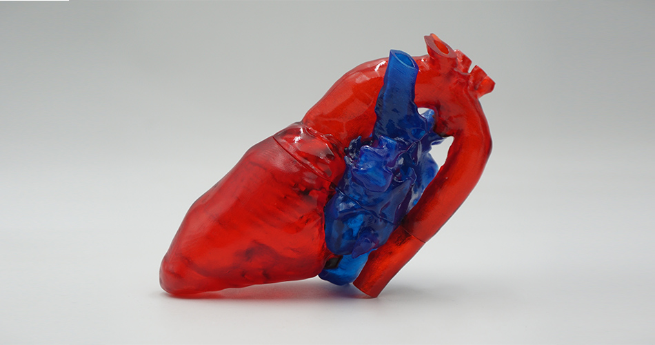 3D printing-materials produce life-like anatomical features